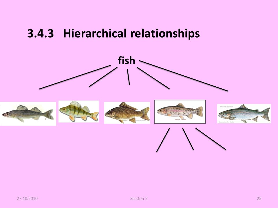 3.4.3 Hierarchical relationships 27.10.2010Session 325 fish