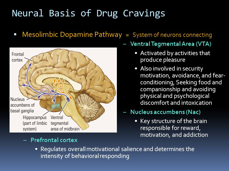 Neural Basis of Drug Cravings  Mesolimbic Dopamine Pathway = System of neurons connecting –Ventral Tegmental Area (VTA) Activated by activities that