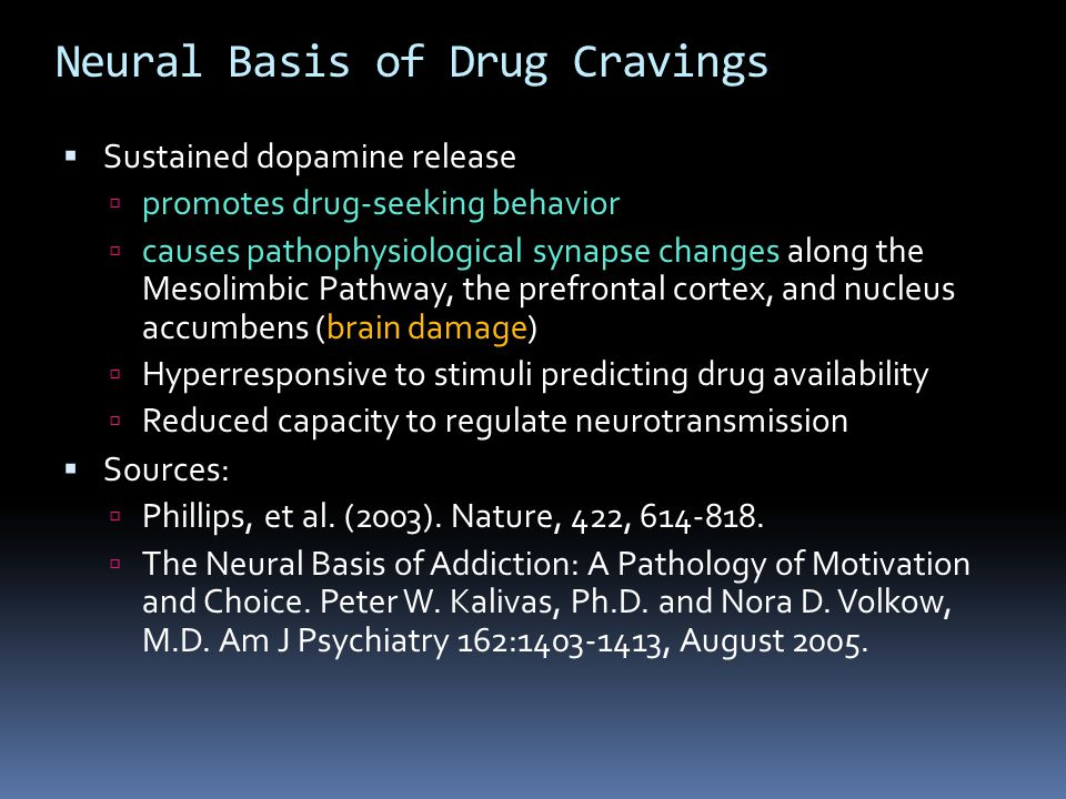 Neural Basis of Drug Cravings  Sustained dopamine release  promotes drug-seeking behavior  causes pathophysiological synapse changes along the Meso