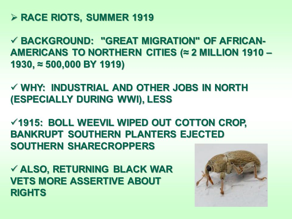  RACE RIOTS, SUMMER 1919 BACKGROUND: GREAT MIGRATION OF AFRICAN- AMERICANS TO NORTHERN CITIES (≈ 2 MILLION 1910 – 1930, ≈ 500,000 BY 1919) BACKGROUND: GREAT MIGRATION OF AFRICAN- AMERICANS TO NORTHERN CITIES (≈ 2 MILLION 1910 – 1930, ≈ 500,000 BY 1919) WHY: INDUSTRIAL AND OTHER JOBS IN NORTH (ESPECIALLY DURING WWI), LESS WHY: INDUSTRIAL AND OTHER JOBS IN NORTH (ESPECIALLY DURING WWI), LESS 1915: BOLL WEEVIL WIPED OUT COTTON CROP, BANKRUPT SOUTHERN PLANTERS EJECTED SOUTHERN SHARECROPPERS 1915: BOLL WEEVIL WIPED OUT COTTON CROP, BANKRUPT SOUTHERN PLANTERS EJECTED SOUTHERN SHARECROPPERS ALSO, RETURNING BLACK WAR ALSO, RETURNING BLACK WAR VETS MORE ASSERTIVE ABOUT RIGHTS