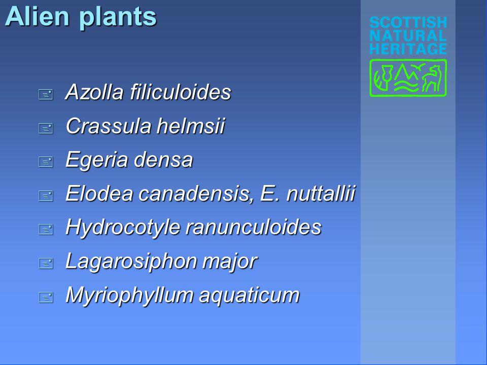 Alien plants + Azolla filiculoides + Crassula helmsii + Egeria densa + Elodea canadensis, E.
