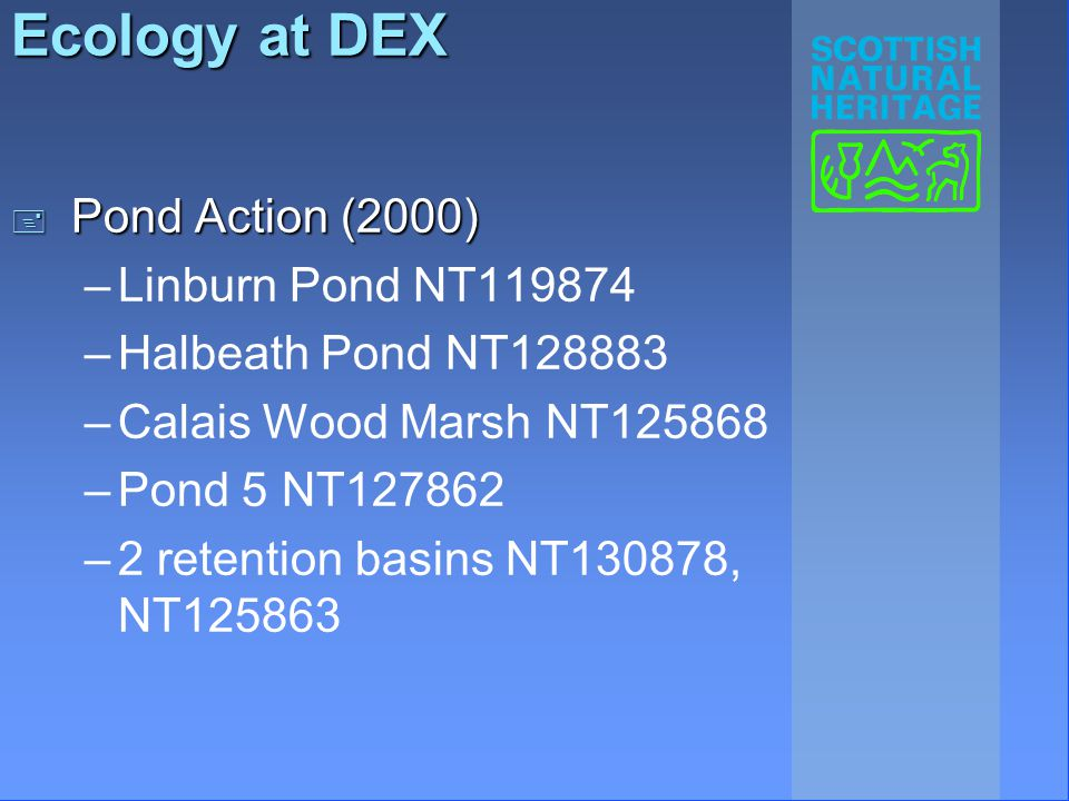 Ecology at DEX + Pond Action (2000) –Linburn Pond NT119874 –Halbeath Pond NT128883 –Calais Wood Marsh NT125868 –Pond 5 NT127862 –2 retention basins NT130878, NT125863