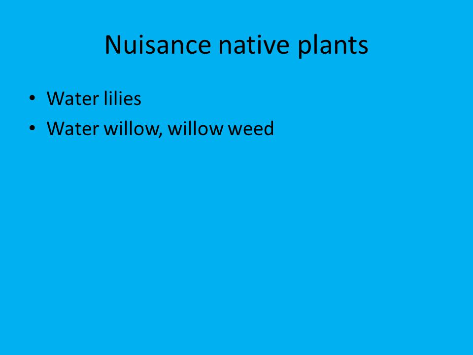 Nuisance native plants Water lilies Water willow, willow weed