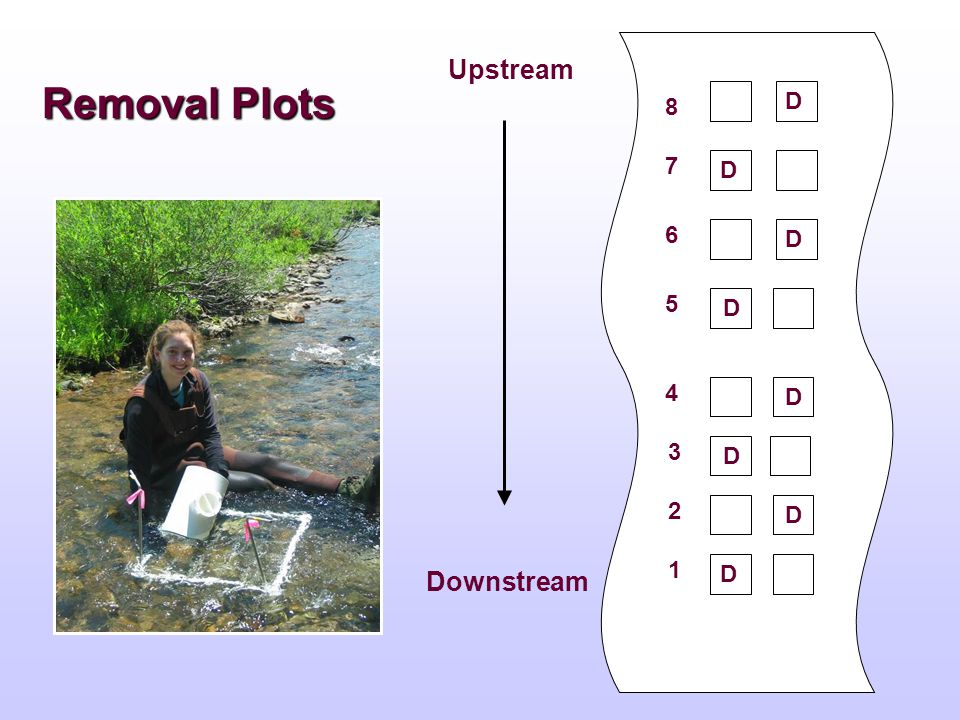Removal Plots Upstream Downstream 8 2 3 4 5 6 7 1 D D D D D D D D