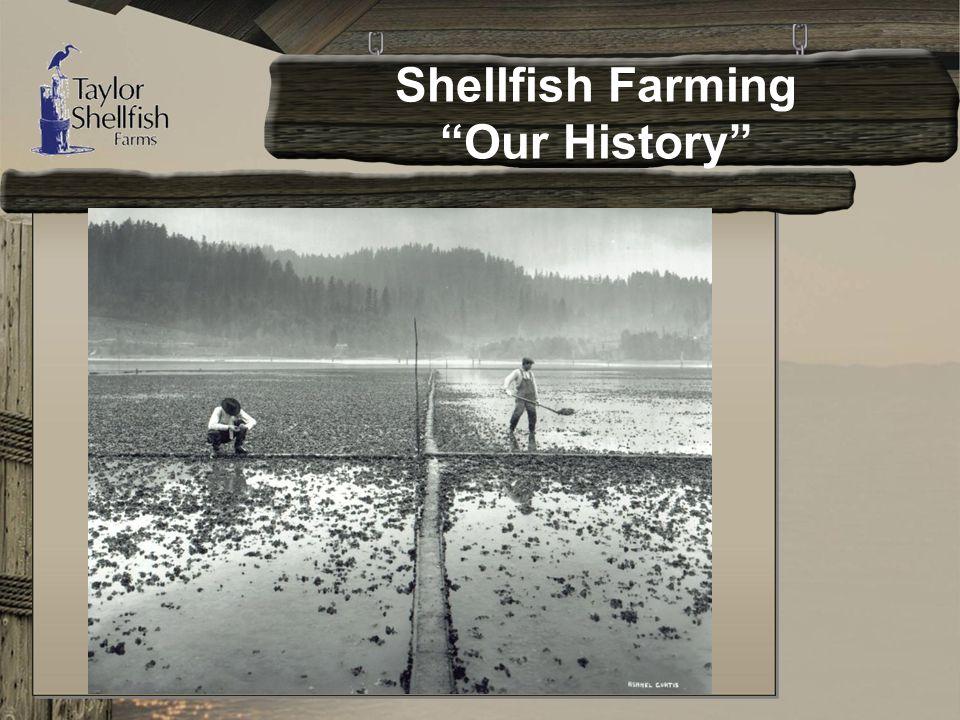 Shellfish Farming Our History