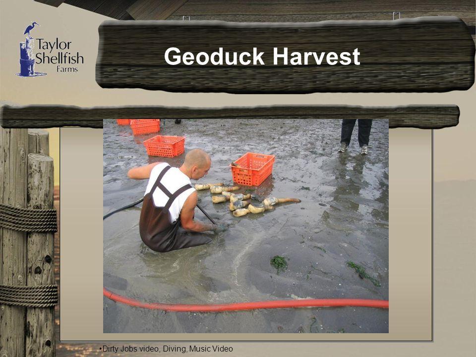 Geoduck Harvest Dirty Jobs video, Diving, Music Video