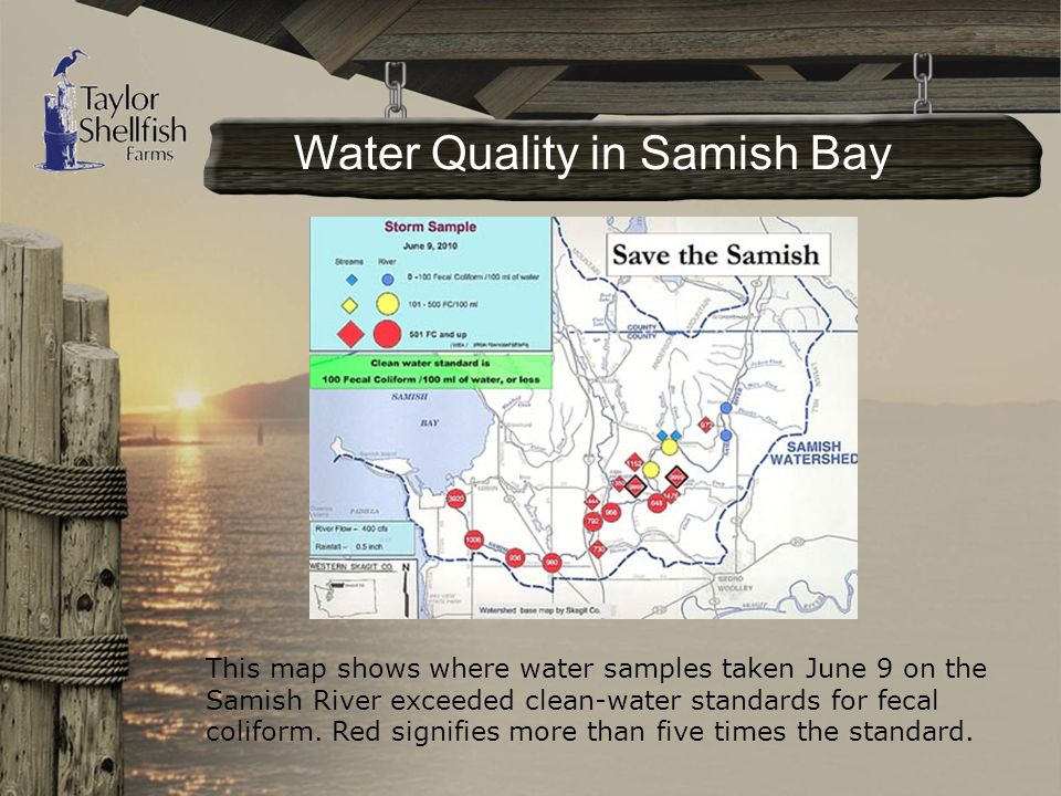 This map shows where water samples taken June 9 on the Samish River exceeded clean-water standards for fecal coliform.