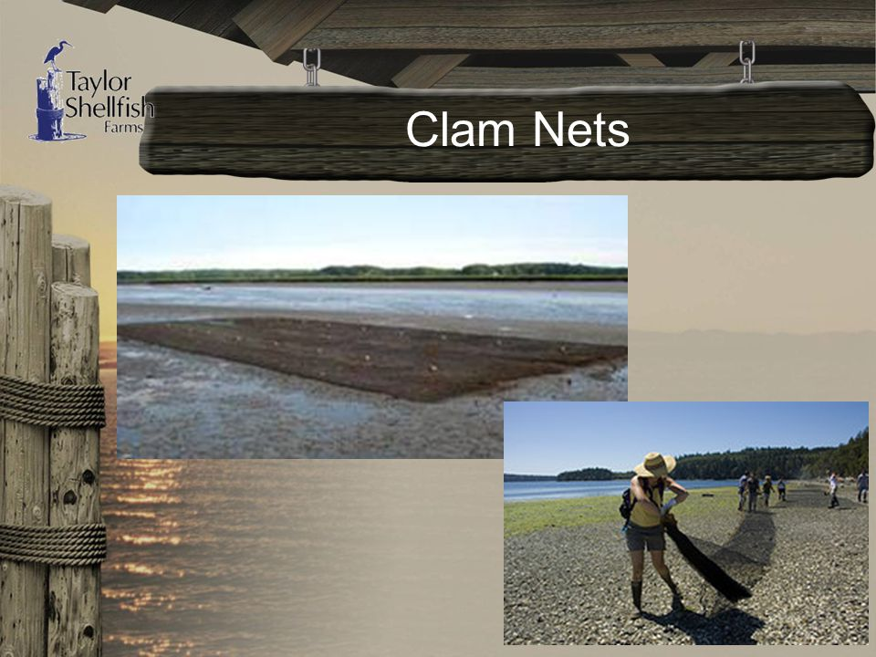 Clam Nets