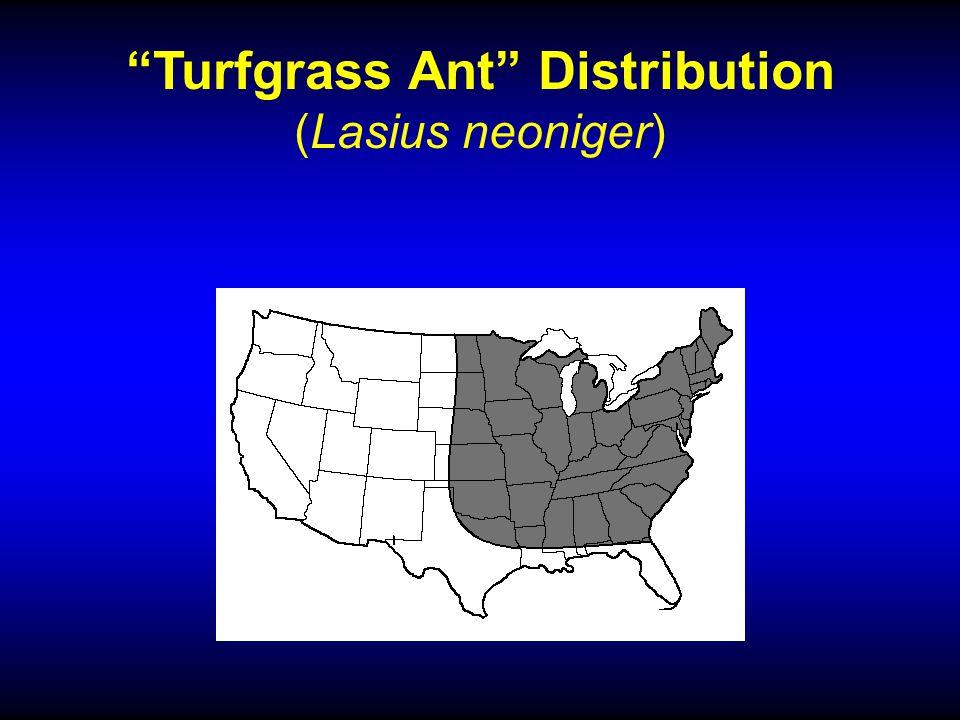 Turfgrass Ant Distribution (Lasius neoniger)