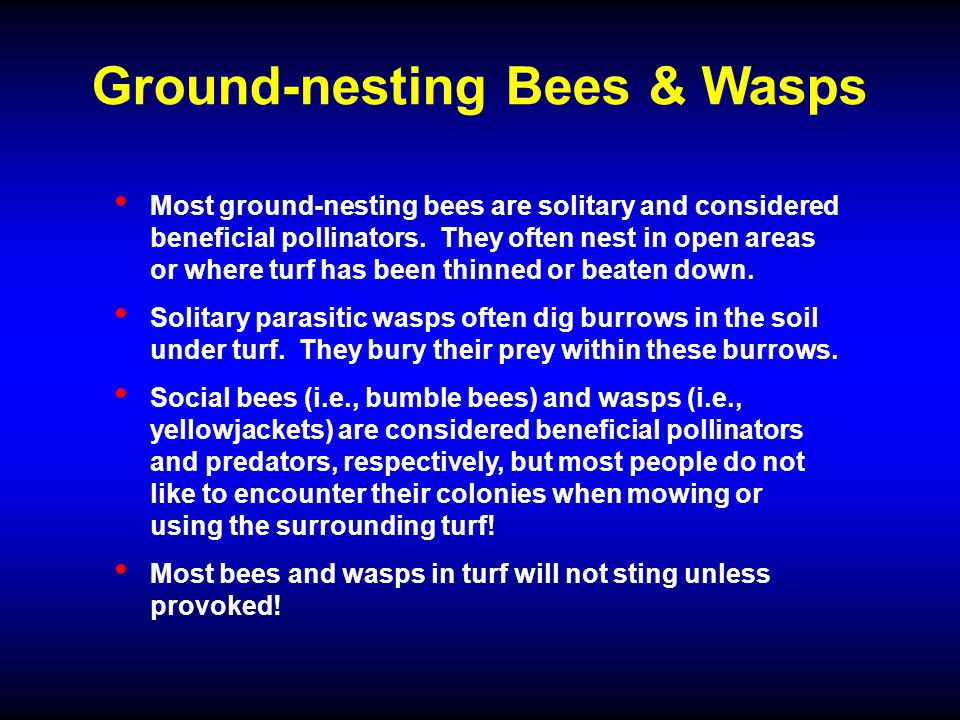 Ground-nesting Bees & Wasps Most ground-nesting bees are solitary and considered beneficial pollinators.