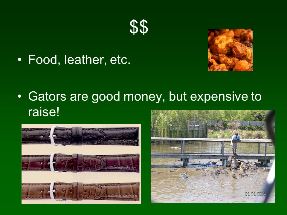 $$ Food, leather, etc. Gators are good money, but expensive to raise!