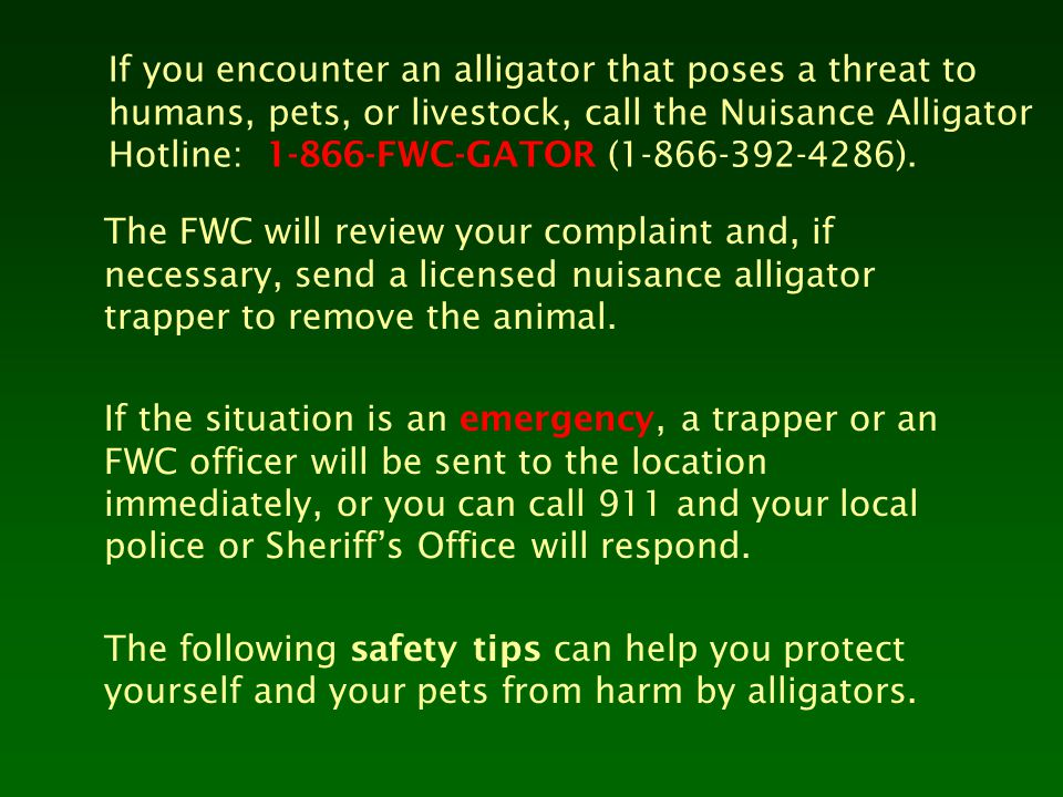If you encounter an alligator that poses a threat to humans, pets, or livestock, call the Nuisance Alligator Hotline: 1-866-FWC-GATOR (1-866-392-4286)
