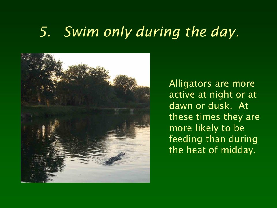 5.Swim only during the day. Alligators are more active at night or at dawn or dusk.