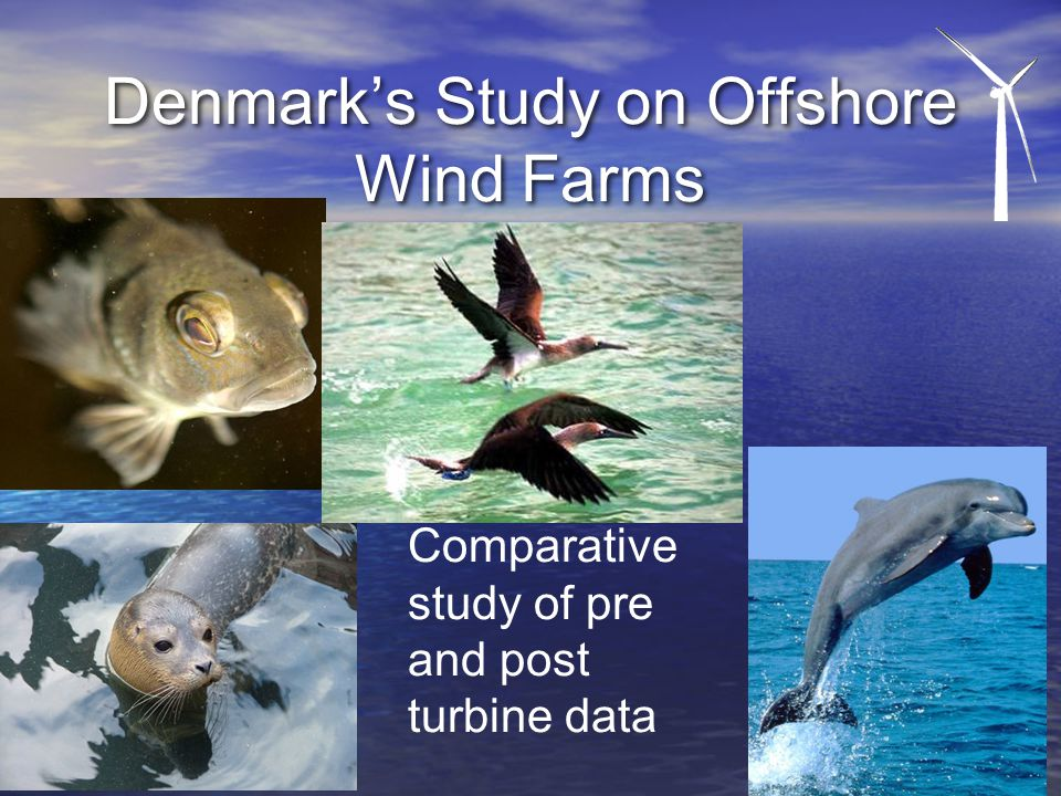 Denmark's Study on Offshore Wind Farms Comparative study of pre and post turbine data