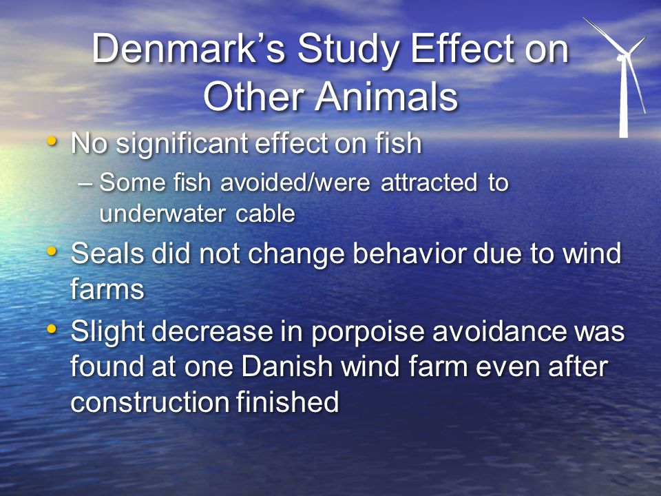 Denmark's Study Effect on Other Animals No significant effect on fish –Some fish avoided/were attracted to underwater cable Seals did not change behavior due to wind farms Slight decrease in porpoise avoidance was found at one Danish wind farm even after construction finished No significant effect on fish –Some fish avoided/were attracted to underwater cable Seals did not change behavior due to wind farms Slight decrease in porpoise avoidance was found at one Danish wind farm even after construction finished