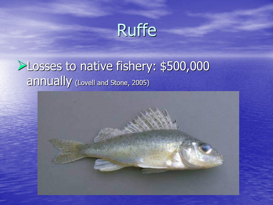Ruffe  Losses to native fishery: $500,000 annually (Lovell and Stone, 2005)
