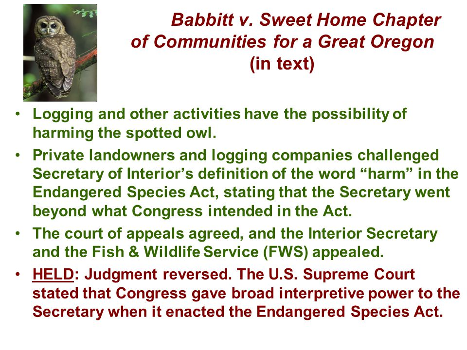 Babbitt v. Sweet Home Chapter of Communities for a Great Oregon (in text) Logging and other activities have the possibility of harming the spotted owl