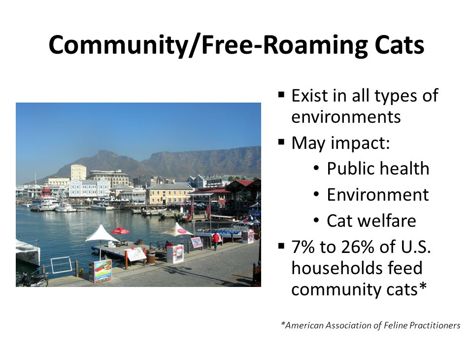 Community/Free-Roaming Cats  Exist in all types of environments  May impact: Public health Environment Cat welfare  7% to 26% of U.S.