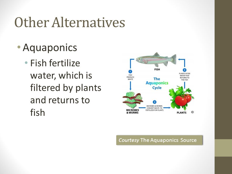 Other Alternatives Aquaponics Fish fertilize water, which is filtered by plants and returns to fish Courtesy The Aquaponics Source