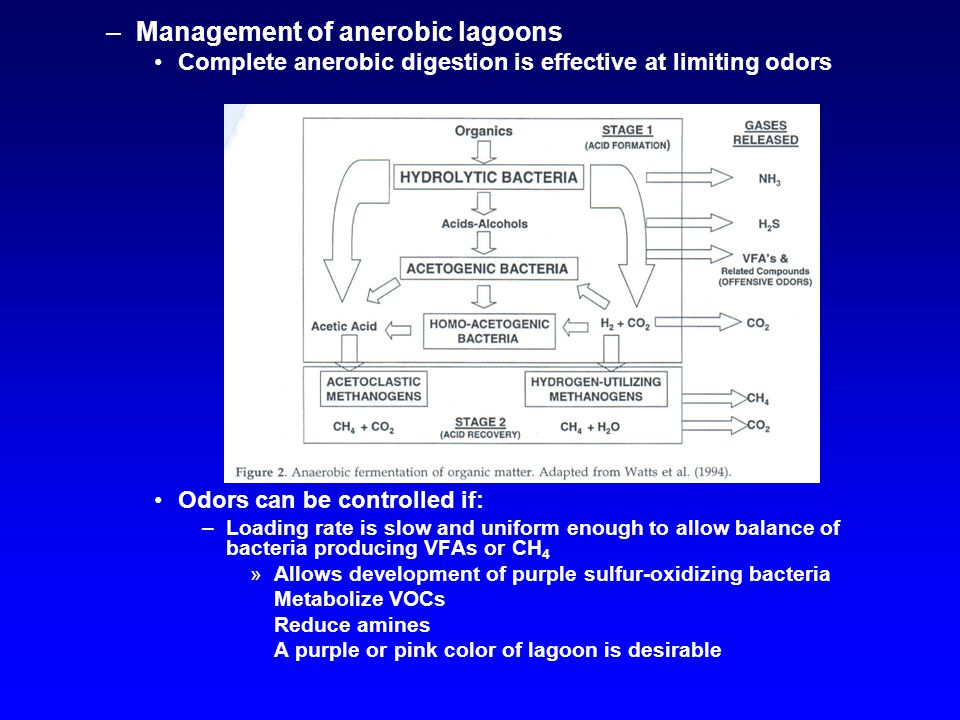 –Management of anerobic lagoons Complete anerobic digestion is effective at limiting odors Odors can be controlled if: –Loading rate is slow and uniform enough to allow balance of bacteria producing VFAs or CH 4 »Allows development of purple sulfur-oxidizing bacteria Metabolize VOCs Reduce amines A purple or pink color of lagoon is desirable