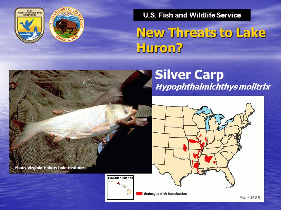 U.S. Fish and Wildlife Service New Threats to Lake Huron? Photo-Virginia Polytechnic Institute Silver Carp Hypophthalmichthys molitrix Map-USGS