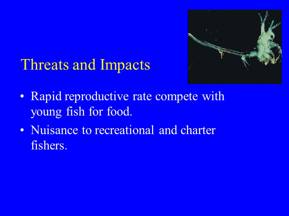 Threats and Impacts Rapid reproductive rate compete with young fish for food.
