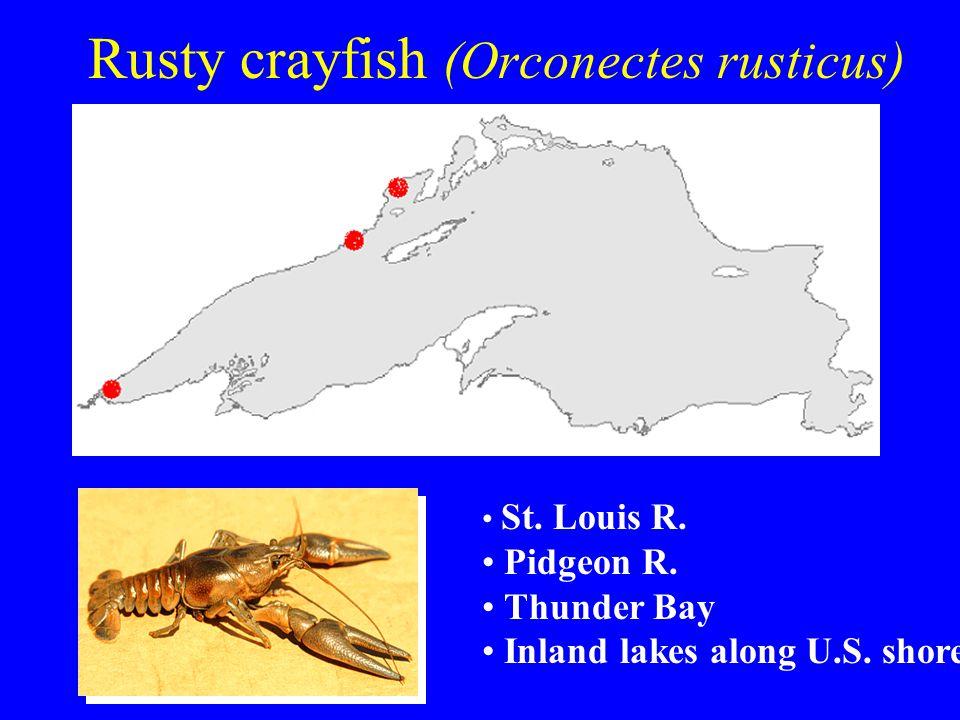 Rusty crayfish (Orconectes rusticus) St. Louis R. Pidgeon R. Thunder Bay Inland lakes along U.S. shore