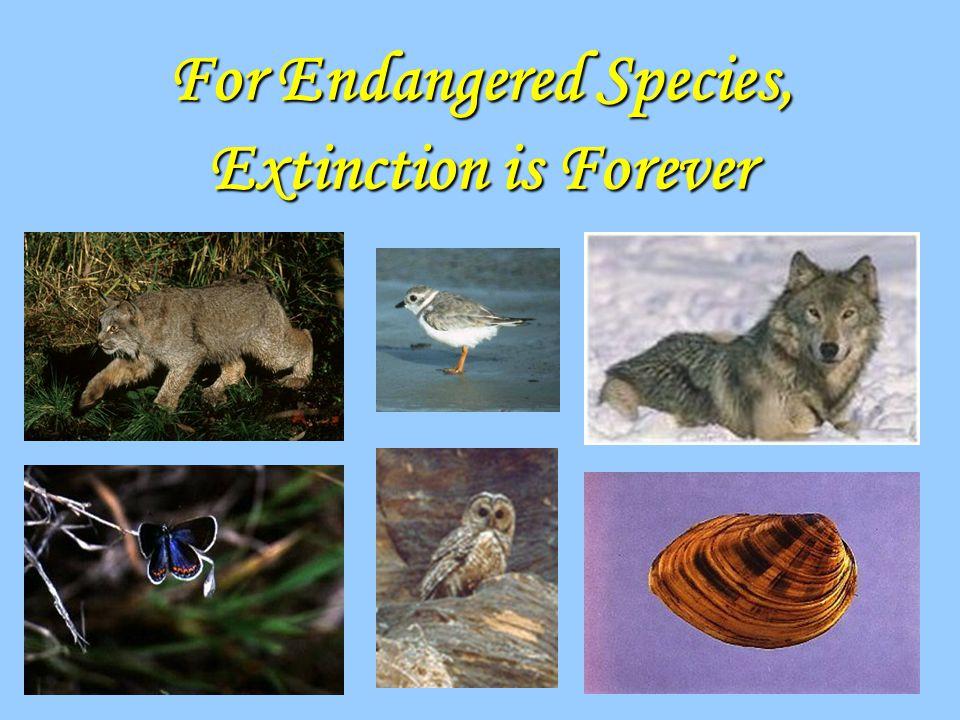 For Endangered Species, Extinction is Forever