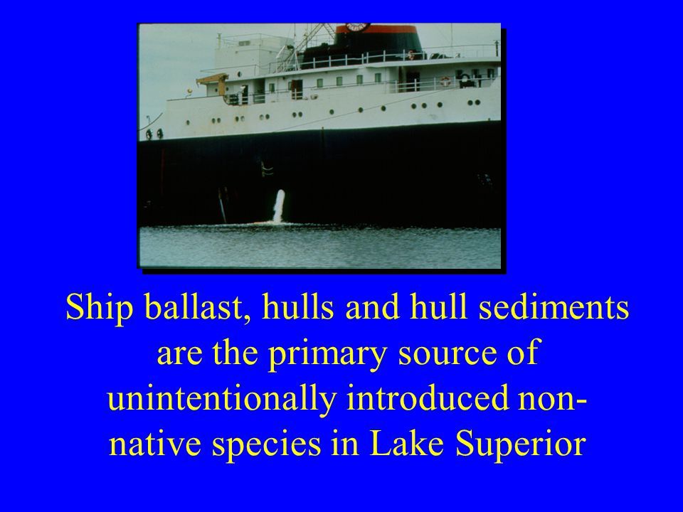 Ship ballast, hulls and hull sediments are the primary source of unintentionally introduced non- native species in Lake Superior