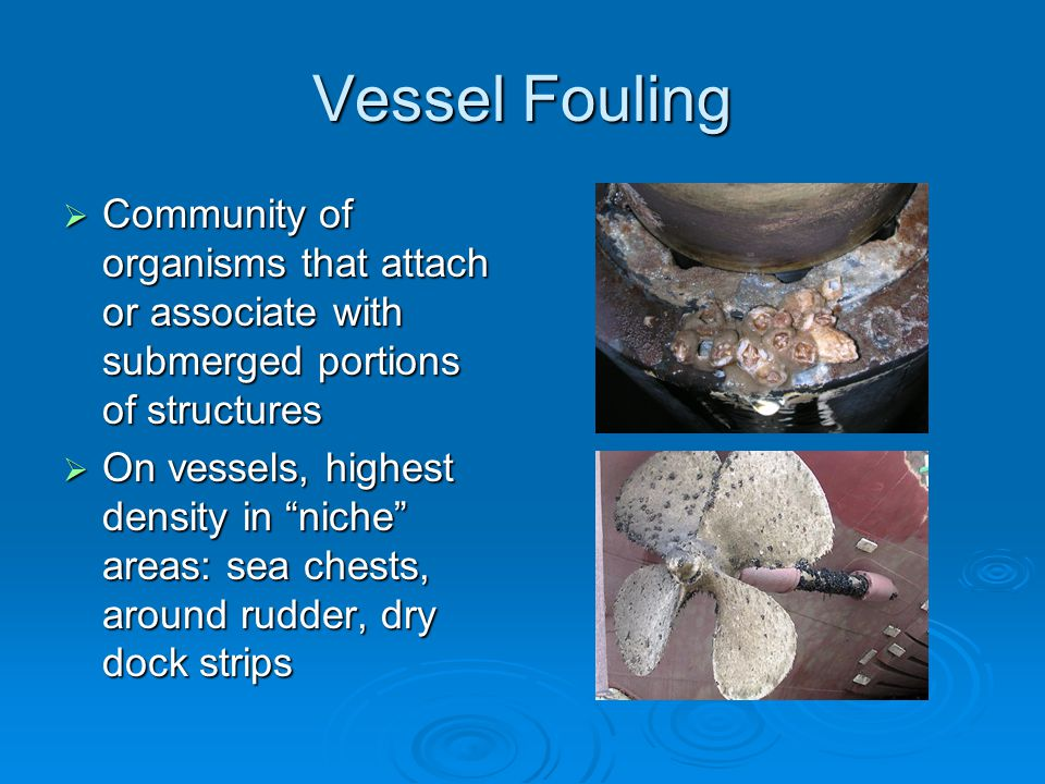 Vessel Fouling  Community of organisms that attach or associate with submerged portions of structures  On vessels, highest density in niche areas: sea chests, around rudder, dry dock strips