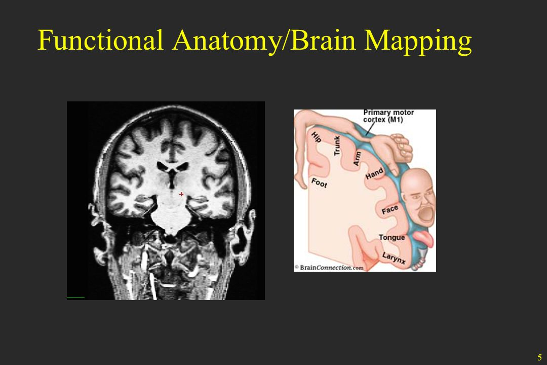 5 Functional Anatomy/Brain Mapping