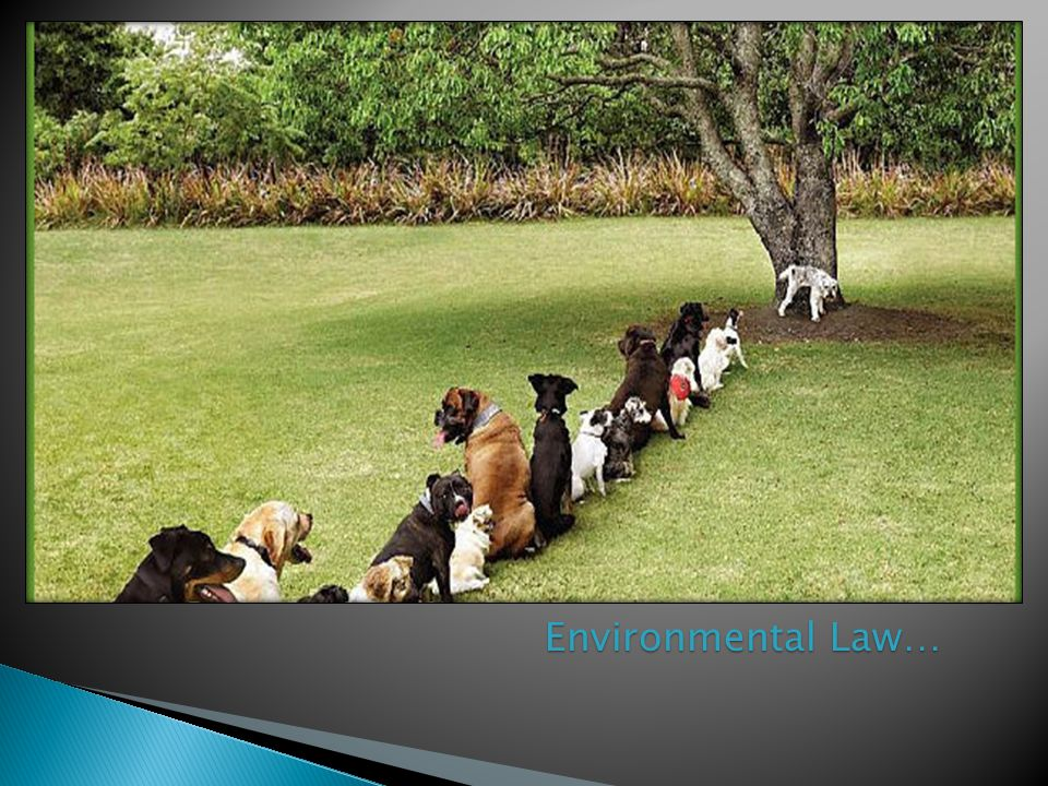 Environmental Law…