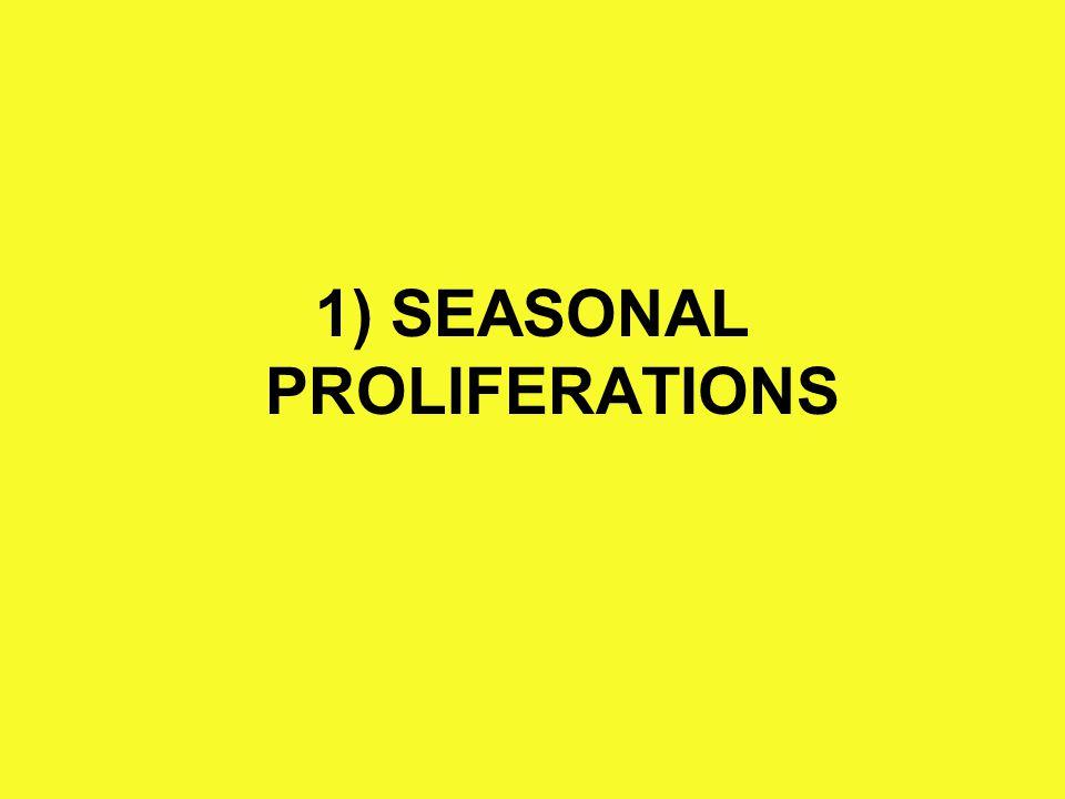 2) OCCASIONAL PROLIFERATIONS (not dependent of season) -Cnidae (venomous) - Iuliforms (millipedes, vesicant)