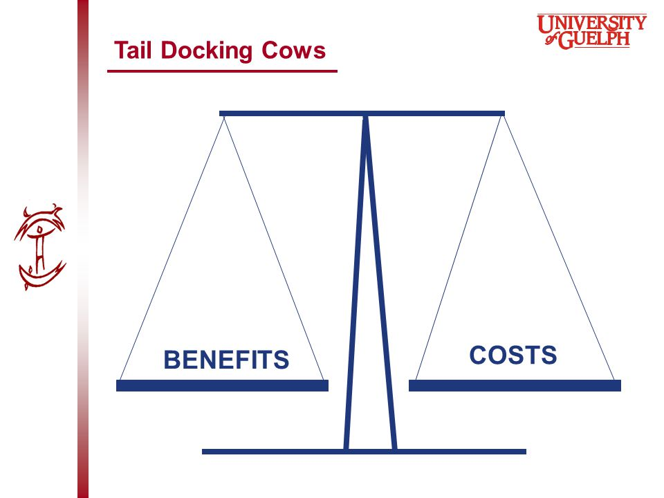 Tail Docking Cows BENEFITS COSTS
