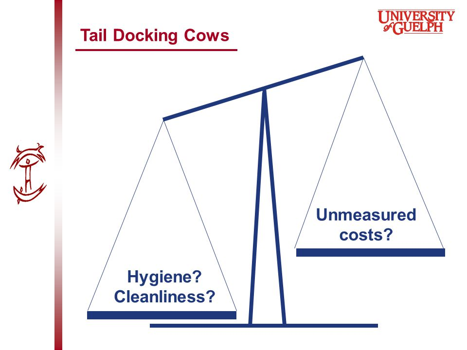 Tail Docking Cows Hygiene? Cleanliness? Unmeasured costs?