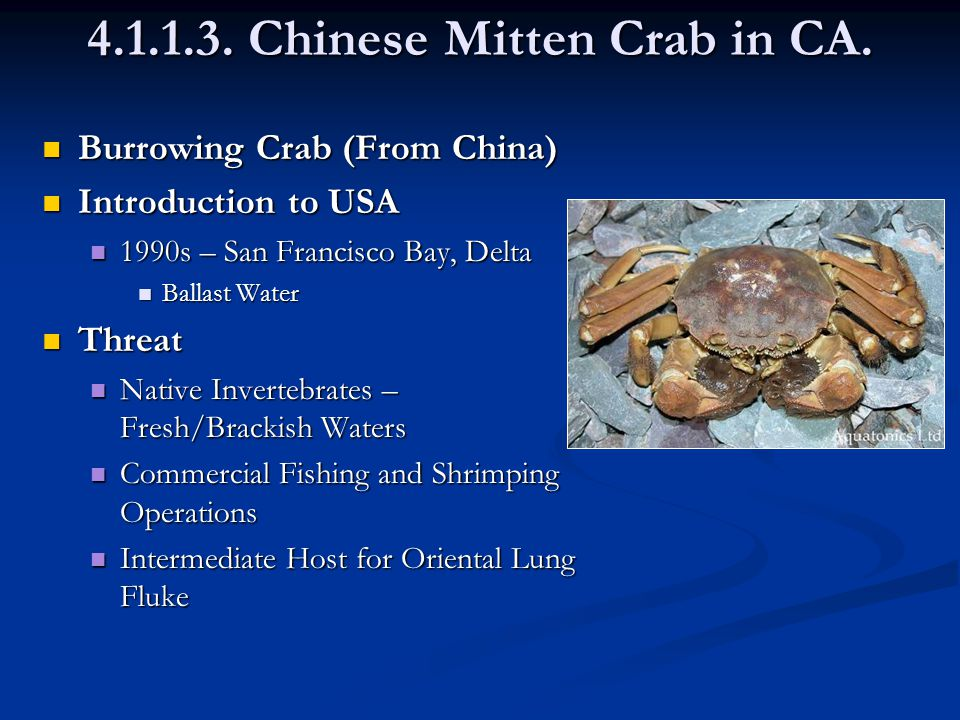 4.1.1.3. Chinese Mitten Crab in CA.