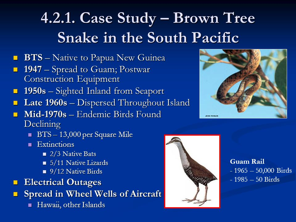 4.2.1. Case Study – Brown Tree Snake in the South Pacific BTS – Native to Papua New Guinea BTS – Native to Papua New Guinea 1947 – Spread to Guam; Pos