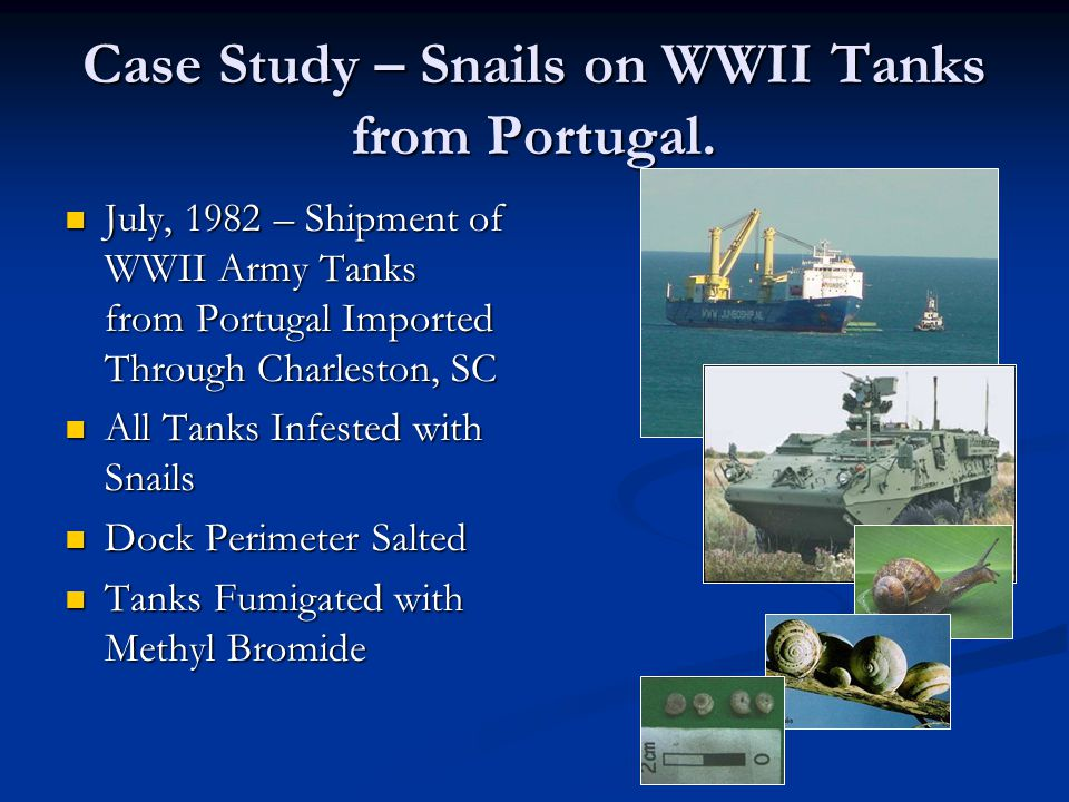 Case Study – Snails on WWII Tanks from Portugal.