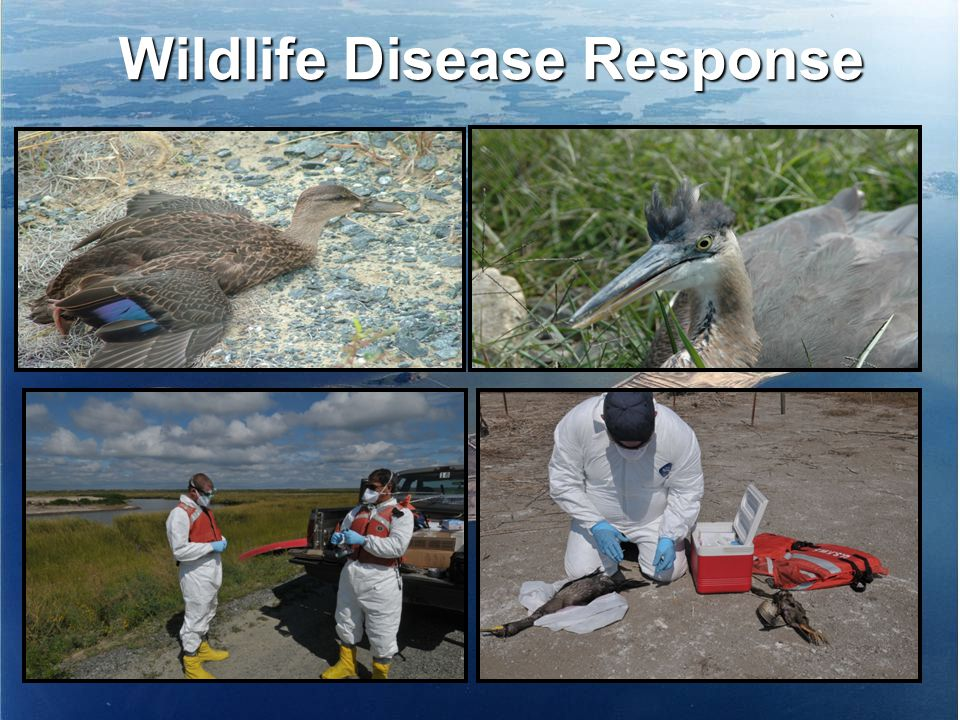 Wildlife Disease Response
