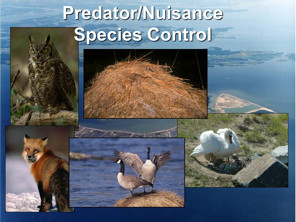 Predator/Nuisance Species Control