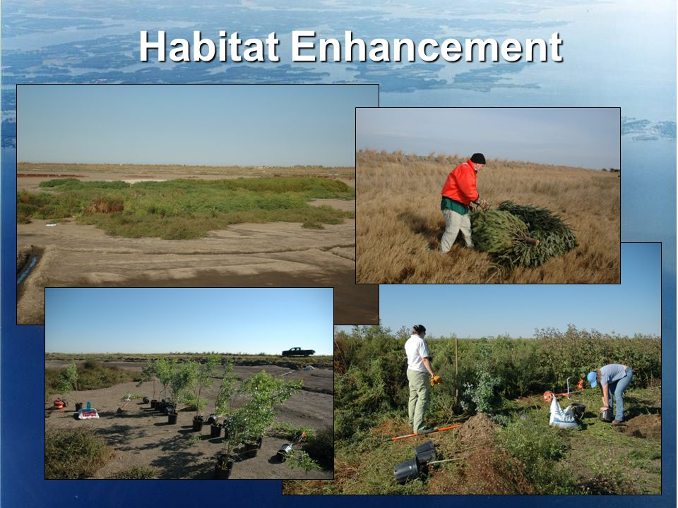 Habitat Enhancement