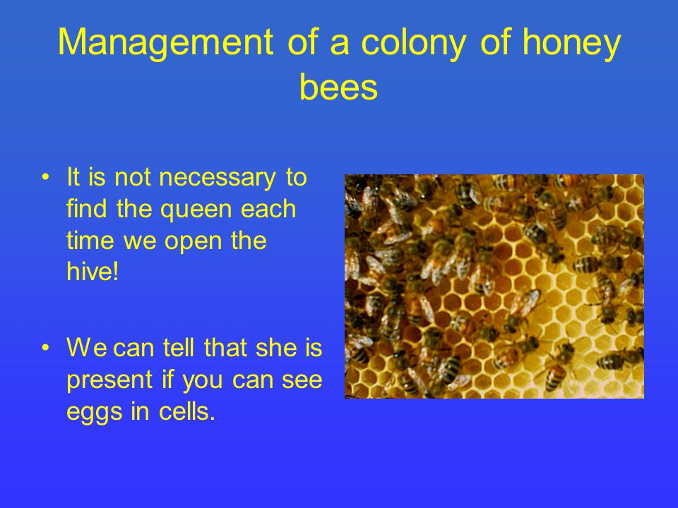 Management of a colony of honey bees It is not necessary to find the queen each time we open the hive.