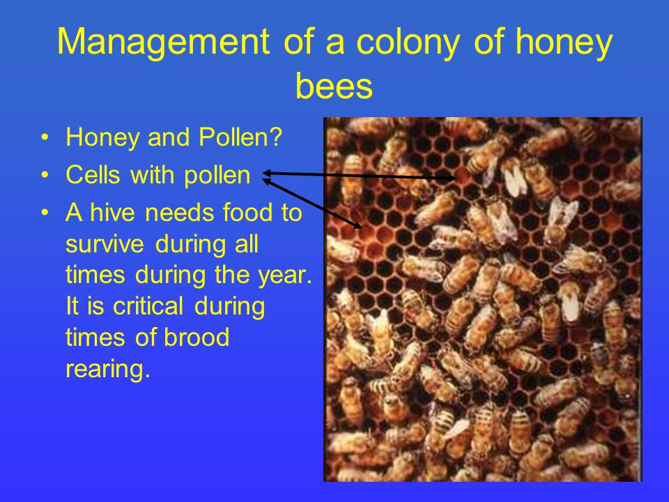 Management of a colony of honey bees Honey and Pollen.