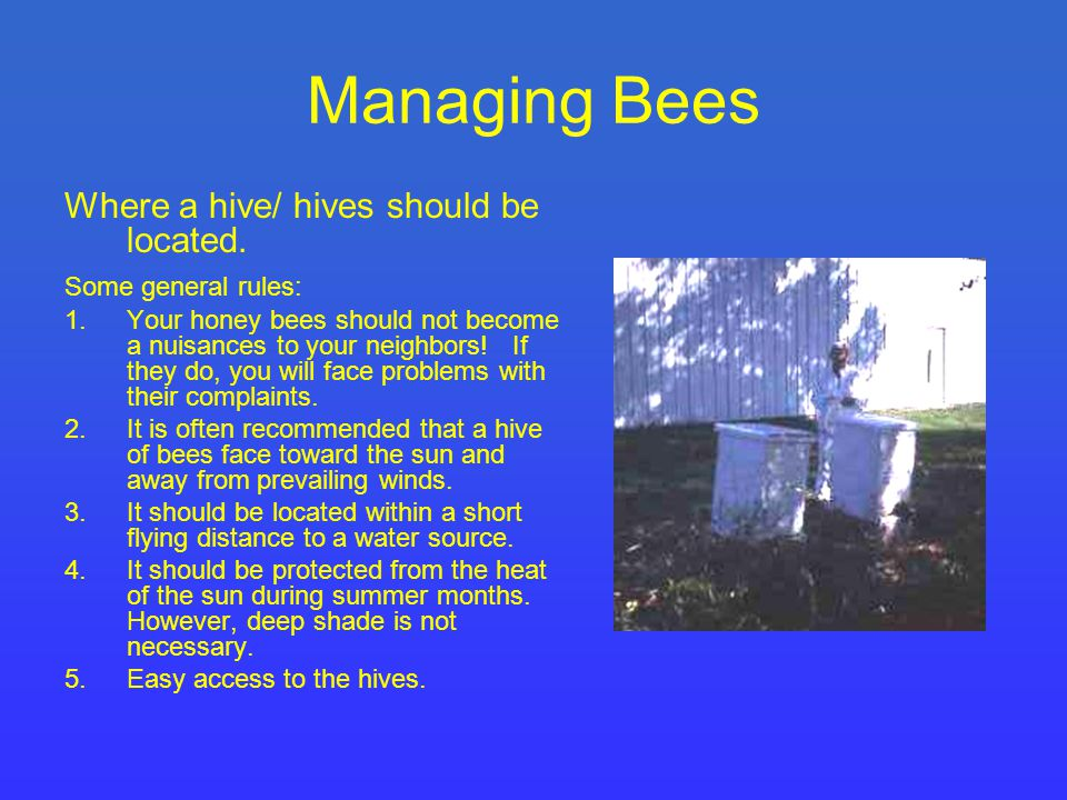 Managing Bees Where a hive/ hives should be located.