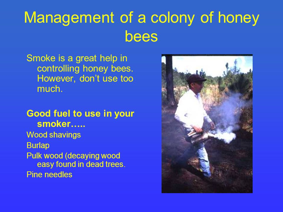 Management of a colony of honey bees Smoke is a great help in controlling honey bees.