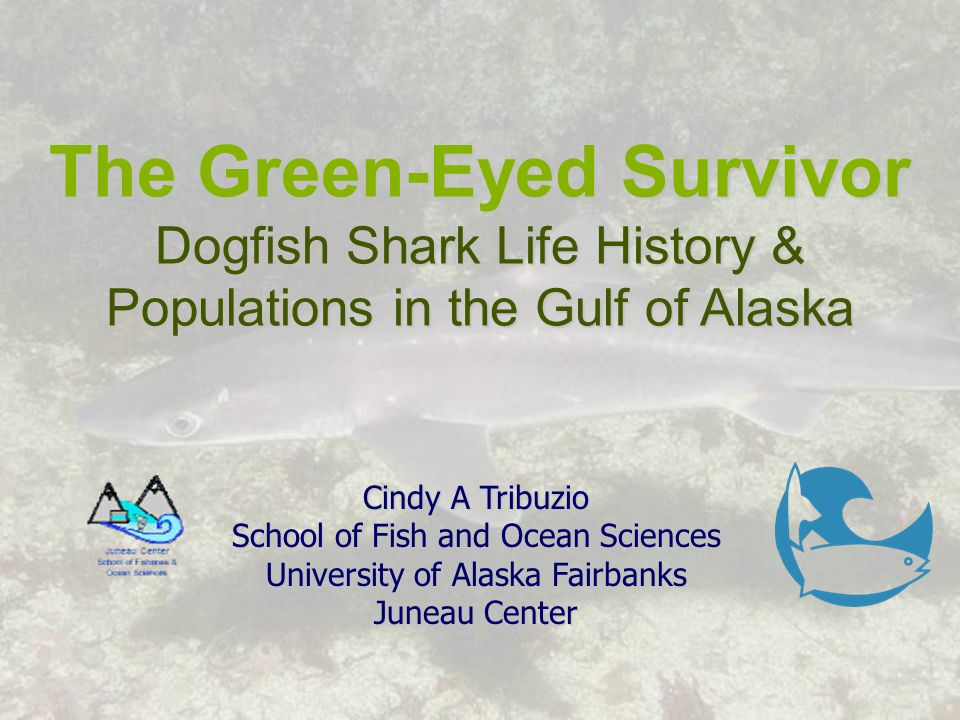 The Green-Eyed Survivor Dogfish Shark Life History & Populations in the Gulf of Alaska Cindy A Tribuzio School of Fish and Ocean Sciences University of Alaska Fairbanks Juneau Center
