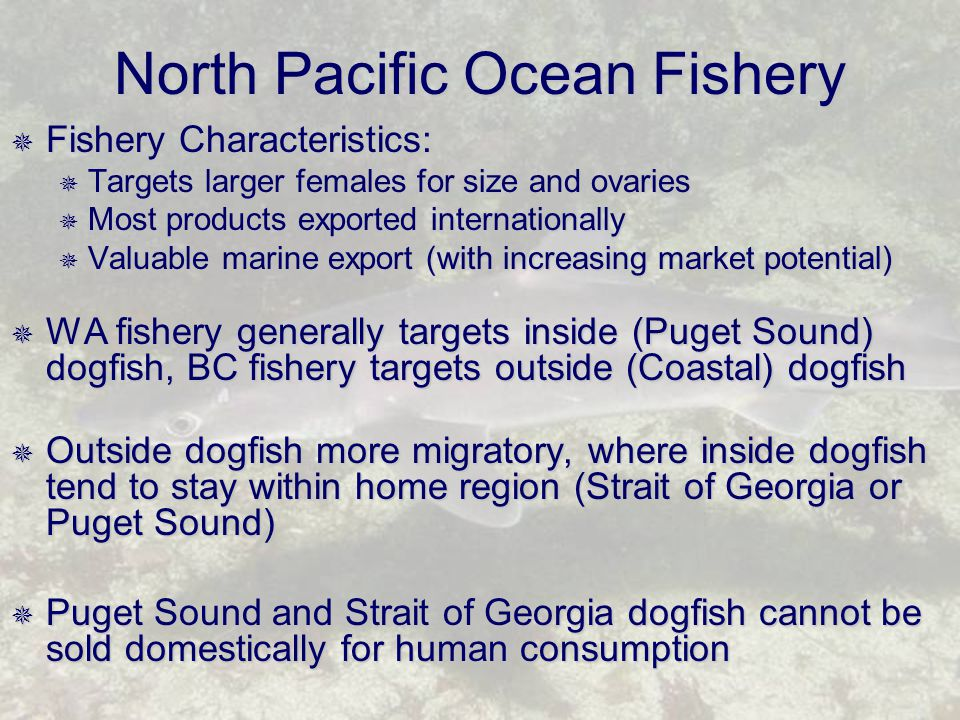 North Pacific Ocean Fishery  Fishery Characteristics:  Targets larger females for size and ovaries  Most products exported internationally  Valuable marine export (with increasing market potential)  WA fishery generally targets inside (Puget Sound) dogfish, BC fishery targets outside (Coastal) dogfish  Outside dogfish more migratory, where inside dogfish tend to stay within home region (Strait of Georgia or Puget Sound)  Puget Sound and Strait of Georgia dogfish cannot be sold domestically for human consumption