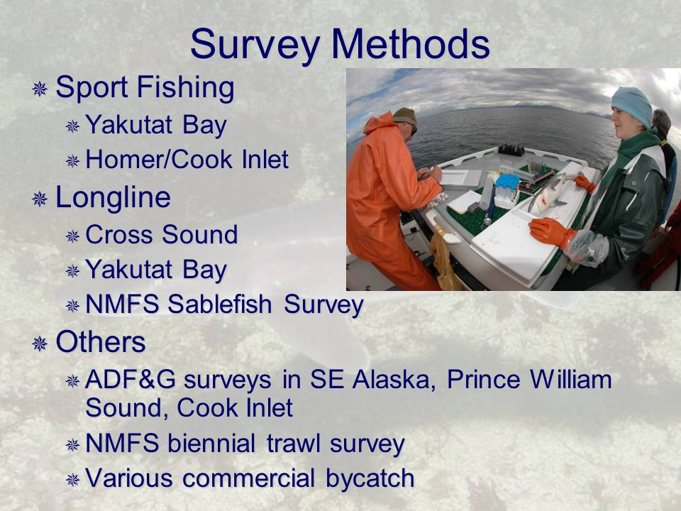 Survey Methods  Sport Fishing  Yakutat Bay  Homer/Cook Inlet  Longline  Cross Sound  Yakutat Bay  NMFS Sablefish Survey  Others  ADF&G surveys in SE Alaska, Prince William Sound, Cook Inlet  NMFS biennial trawl survey  Various commercial bycatch
