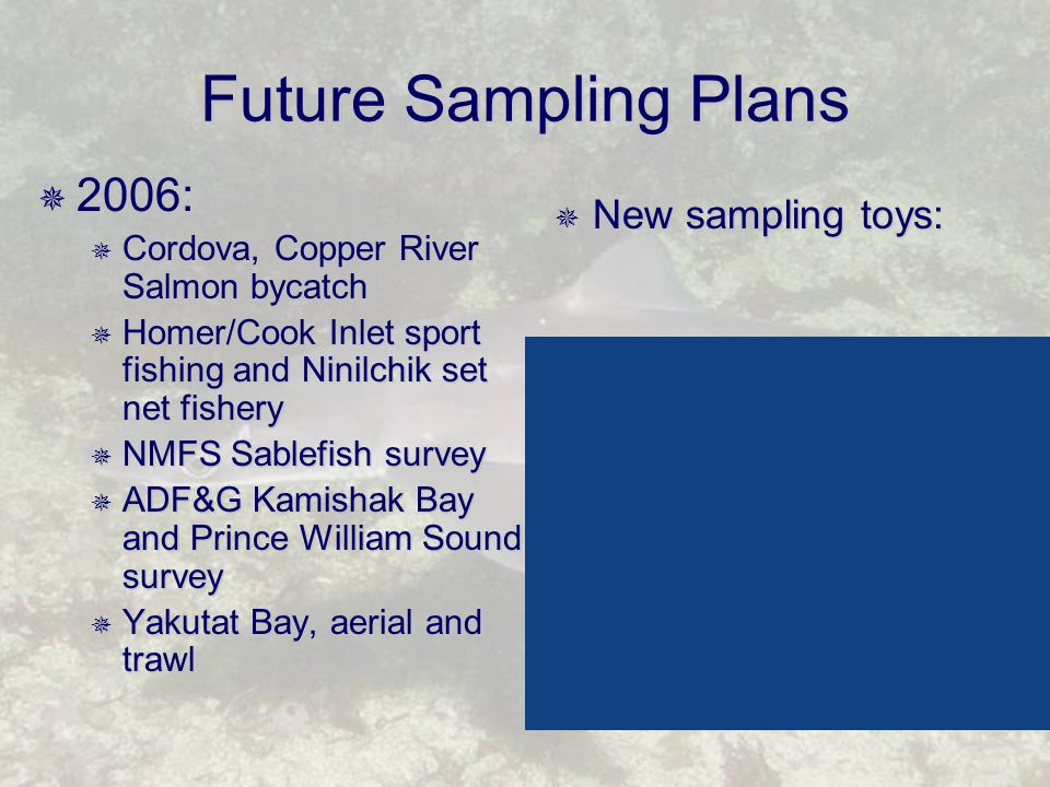 Future Sampling Plans  2006:  Cordova, Copper River Salmon bycatch  Homer/Cook Inlet sport fishing and Ninilchik set net fishery  NMFS Sablefish survey  ADF&G Kamishak Bay and Prince William Sound survey  Yakutat Bay, aerial and trawl  New sampling toys: