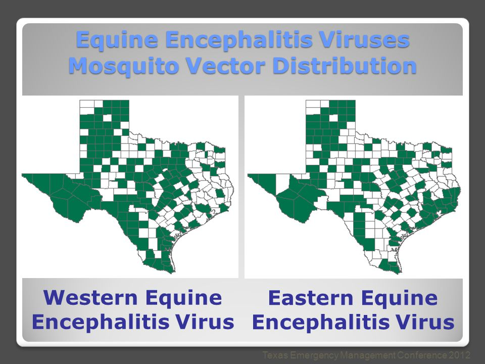 Equine Encephalitis Viruses Mosquito Vector Distribution Texas Emergency Management Conference 2012 Western Equine Encephalitis Virus Eastern Equine Encephalitis Virus